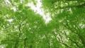 太陽の光が漏れる新緑の木 54454739