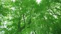 太陽の光が漏れる新緑の木 54454741