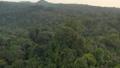 Rainforest, Lush Humid Woods 54493802