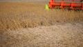 Soy bean combine harvester working in soybean field 54565751