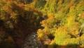 ทิวทัศน์ของใบไม้เปลี่ยนสีจากบริเวณ Shin Tamagawa Onsen ในเดือนตุลาคม 54629775