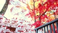 Gotokuji colored leaves and beckoning cat 54782640