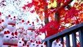 Gotokuji colored leaves and beckoning cat 54782644