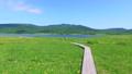 雄国沼のニッコウキスゲ群落と観察木道 54807838