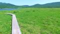 雄国沼のニッコウキスゲ群落と観察木道 54807843