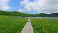雄国沼のニッコウキスゲ群落と観察木道 54807862