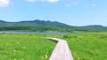 雄国沼のニッコウキスゲ群落と観察木道 54807863