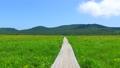 雄国沼のニッコウキスゲ群落と観察木道 54807866