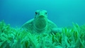 Turtle Swimming in Blue Water 54930600