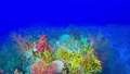 Tropical Fish on Vibrant Coral Reef 54930605