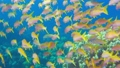 Tropical Fish on Vibrant Coral Reef 54930613
