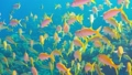 Tropical Fish on Vibrant Coral Reef 54930614