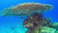 Tropical Fish on Vibrant Coral Reef 54930615