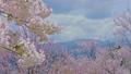HD桜-10(午前) 54948962