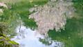 HD桜-03(水面) 54949032
