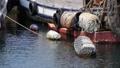 明石港 係留されている漁船 兵庫県 明石市 54993572