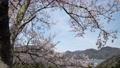 從Kinosaki Onsen Ropeway Onsen-ji Temple周圍的景色 55015462