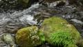 苔むした石と十曽川の流れ 55082190