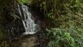 緑の中の沢の落水 55082205