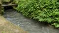 用水路の流れとシダの群落 55082206
