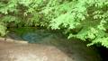 男池湧水 55203502