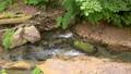男池湧水 55203503