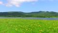 雄国沼のニッコウキスゲ群落 55287675