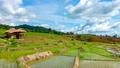 農場 景色 風景 55428900