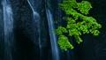 녹색 단풍과 폭포 55480277