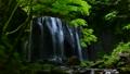 녹색 達沢 不動滝 55480357