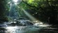 光芒の出る夏の菊池渓谷(音あり)No.1 55488601