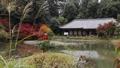 11月 紅葉の浄瑠璃寺-京都の古刹- 55530695