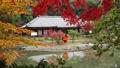 11月 紅葉の浄瑠璃寺-京都の古刹- 55530697