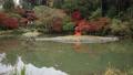 11月 紅葉の浄瑠璃寺-京都の古刹- 55530700