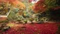 11月 紅葉の徳源院-滋賀の秋景色- 55530701