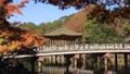 11月秋 紅葉の浮見堂-奈良の秋- 55530833