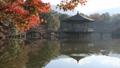 11月秋 紅葉の浮見堂-奈良の秋- 55530838