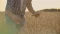 農民 農作物 農の動画 55557794