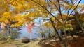 山中湖畔の紅葉(移動撮影・前進) 55562691