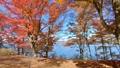 山中湖畔の紅葉(移動撮影・前進) 55562694