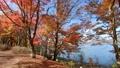 山中湖畔の紅葉(移動撮影・後退) 55562695