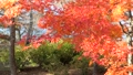 山中湖畔の紅葉(横移動・パン) 55562701