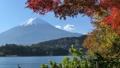 富士山と河口湖畔の紅葉(チルトアップ) 55562703