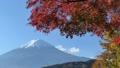 富士山と河口湖畔の紅葉 55562705