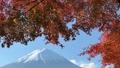 富士山と河口湖畔の紅葉(ズームアウト) 55562706