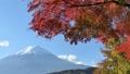 富士山と河口湖畔の紅葉(ズームアウト) 55562707