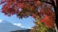 富士山と河口湖畔の紅葉(横移動・パン) 55562708