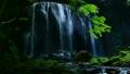 绿色青苔和瀑布 55928058