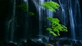 Kaede和瀑布 55976730