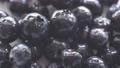 Blueberry, fruit tree, fruit, white background, fruit, harvest, agriculture 55986440